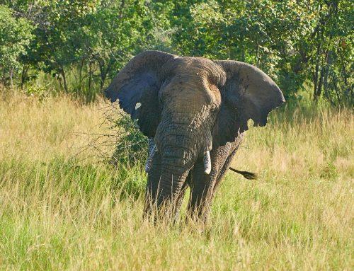 5 Days Rwanda Safari Wildlife Akagera Chimpanzee Trekking Nyungwe