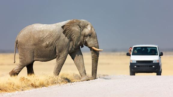 Etosha National Park Namibia Safari tour package