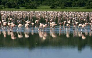 Does Uganda have Flamingos? - Uganda Safari News
