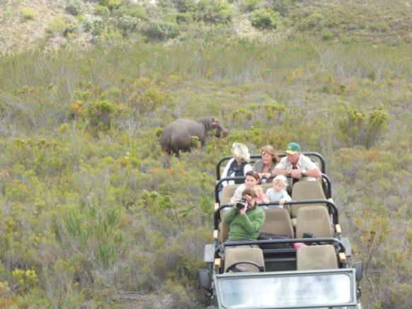 Game Drive - Knysna South Africa Safari Tours