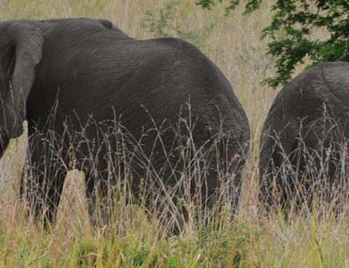 Toro-Semuliki Wildlife Reserve Uganda