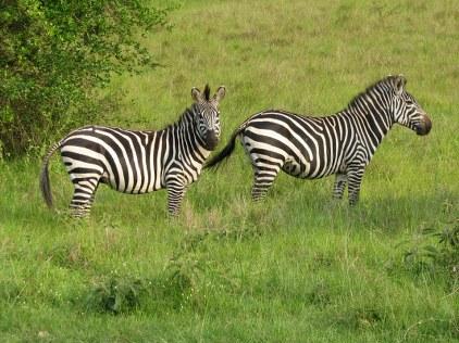 Game Viewing Safari in Uganda 5 Days uganda tour