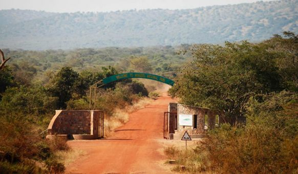 Game drives as a Rwanda Safari activity in Akagera National Park