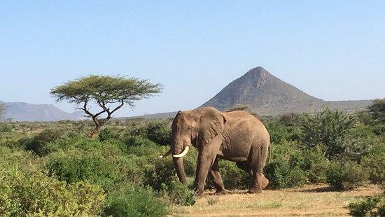 2 days Akagera Safari in Rwanda Akegara National Park