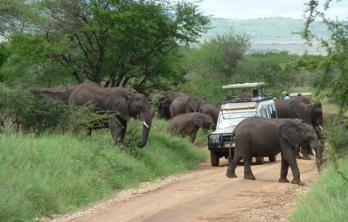9 days uganda wildlife safari