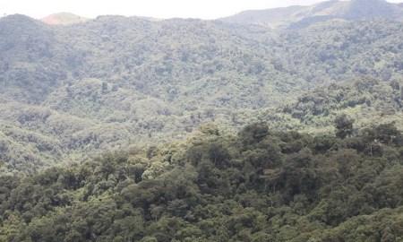 gishwati-mukura-forest-rwanda-safaris