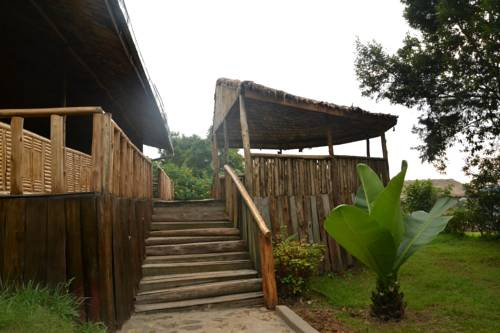gorilla-mist-camp