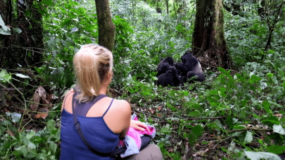 https://www.primeugandasafaris.com/short-uganda-safaris/3-days-gorilla-tour-bwindi.html