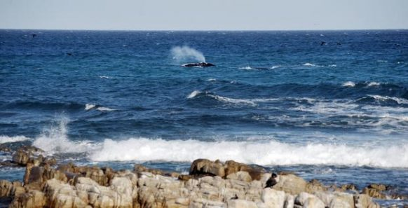 Hermanus South Africa Safari Tours