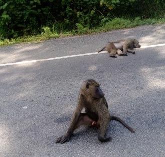 Toro Semliki Wildlife Reserve