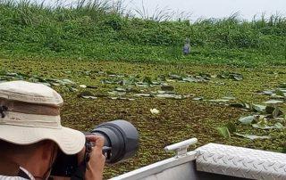 9 days Uganda birding safari