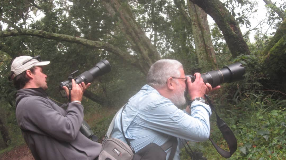 8 Days Uganda birding safari tours/8 days Uganda birding tour Mabamba wetland, Semuliki & Kibale National Park.