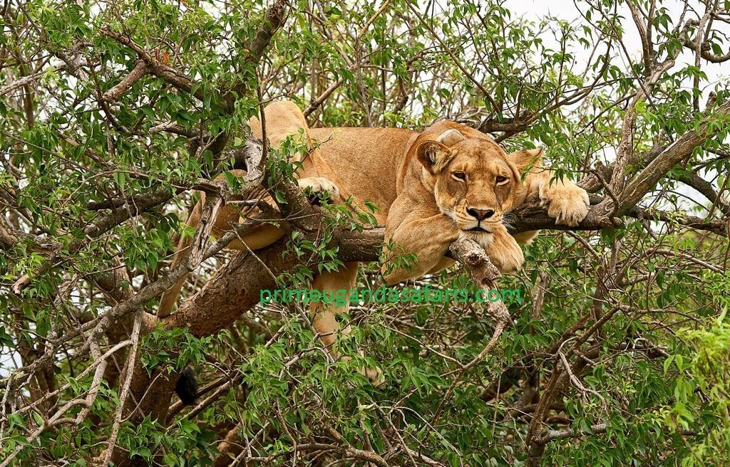 A Wonderful 3 Days Uganda Safari in Queen Elizabeth National Park – Uganda Safari News