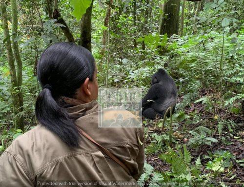 4 Days Uganda Gorilla and Wildlife Safari to Bwindi Impenetrable & Lake Mburo National Parks