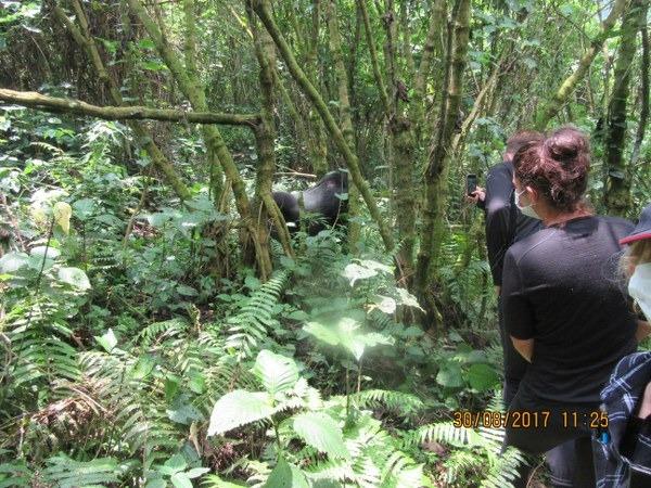 Congo gorilla trekking safari to virunga national park