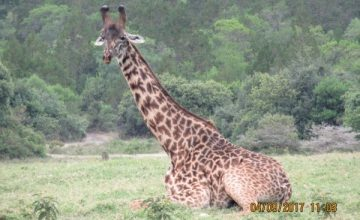 2 Days Tanzania Safari to Ngorongoro National Park,