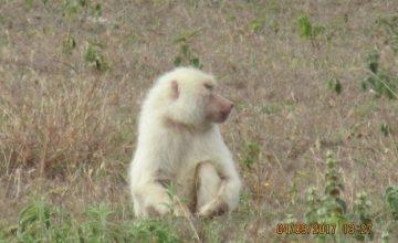14 Days Uganda, Tanzania & Kenya Gorilla & Wildlife Safari