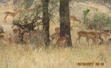 10 Days Tanzania Northern Circuit Wildlife & Birding Safari