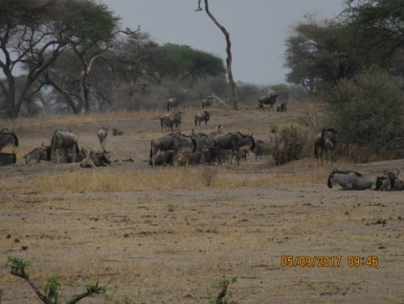 3 Days Tanzania Wildlife Safari to Ngorongoro Crater and Lake Manyara National Park, Safari in Tanzania