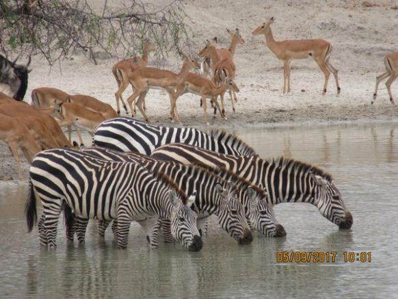 4 Days Kenya Wildlife Safari to Lake Nakuru and Maasai Mara National Park