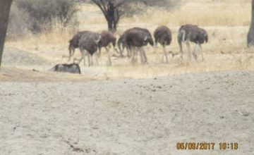 3 Days Tanzania Wildlife Safari to Serengeti National Park, Short Tanzania Safari Tour