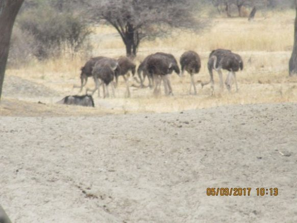 3 Days Tanzania Wildlife Safari to Serengeti National Park, Short Tanzania Safari Tour