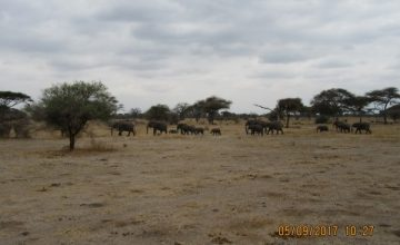 5 Days Wildlife Safari in Kenya to Maasai Mara, Lake Nakuru and Samburu
