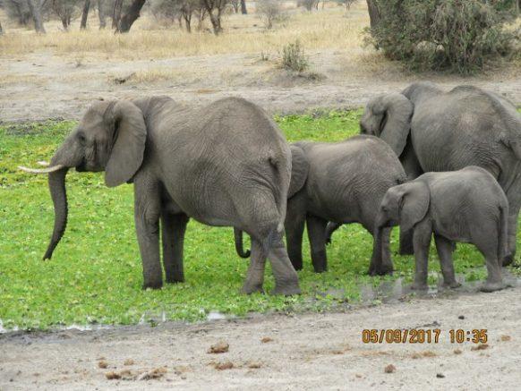 6 Days Wildlife Safari in Tanzania