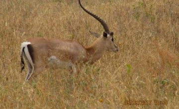 2 Days Tanzania Safari to Tarangire National Park,