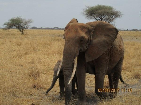 4 Days Kenya Safari to Lake Elementaita and Maasai Mara Game Reserve
