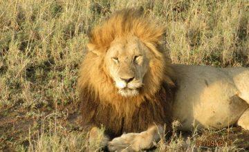 10 Days Kenya & Tanzania Safari tour to Aberdare, Amboseli, Lake Manyara, Ngorongoro, Serengeti & Maasai Mara