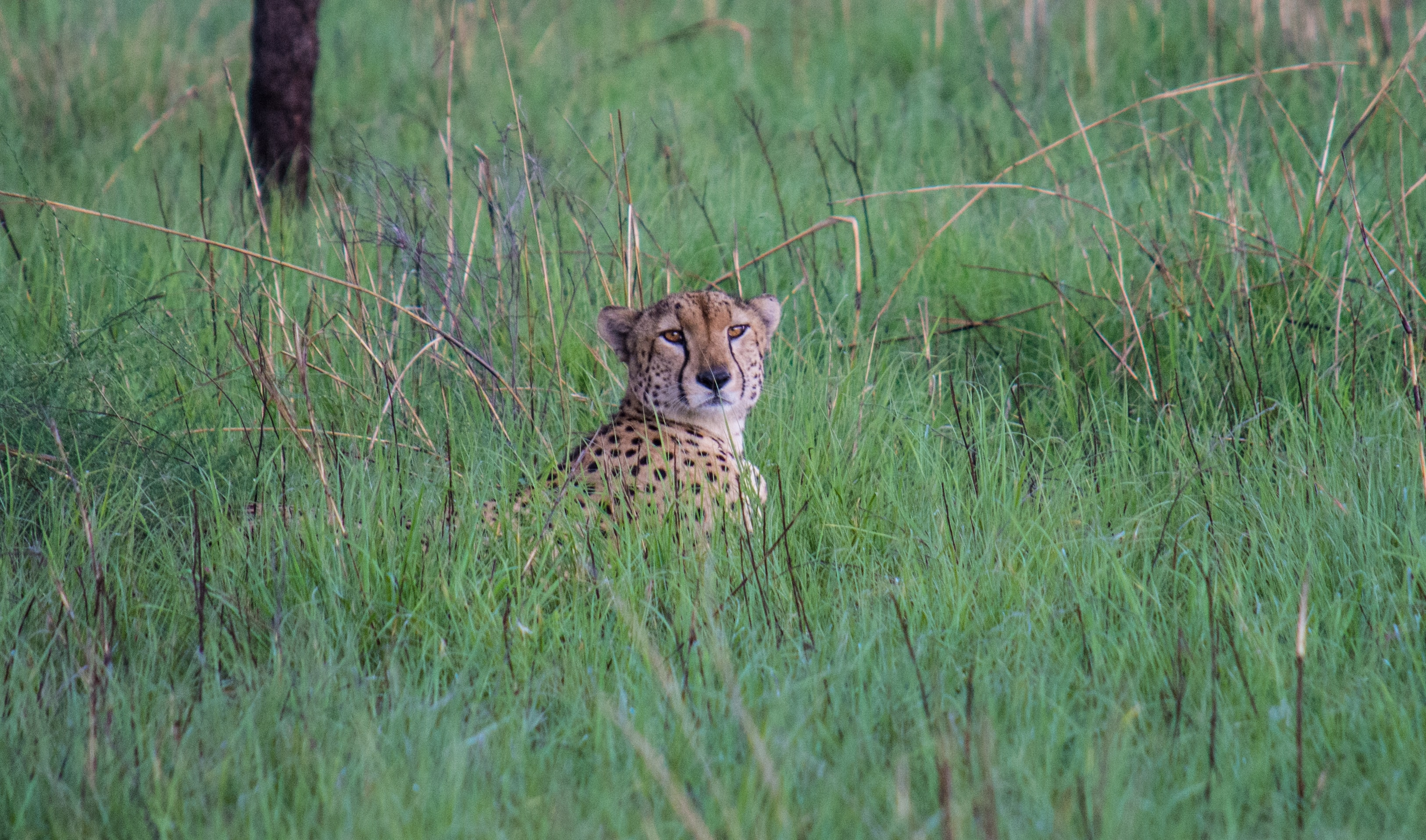 You Won't Hold Unleashing The Beauty in Pian Upe Wildlife Reserve!