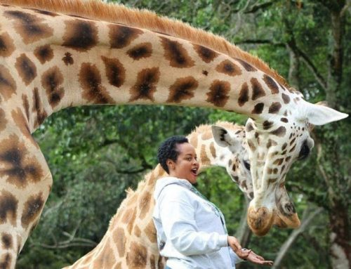 UWEC Seeks 15 Billion Ugx to Take Care of Animals in the Zoo