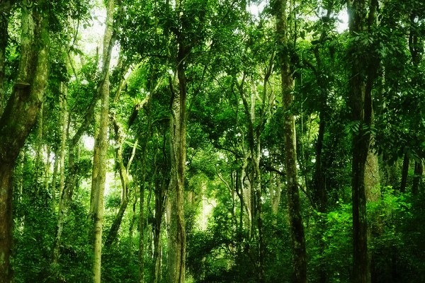 Kaniyo-Pabidi Eco-Tourism Site