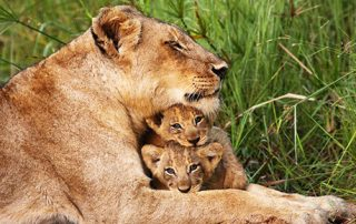 Kruger National Park South Africa Safari Tours
