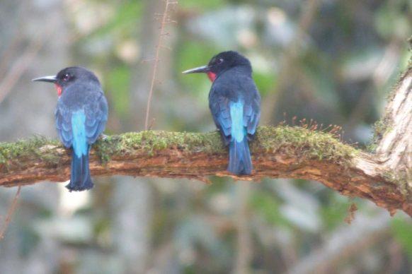 Kyambura Game Reserve Bird watching
