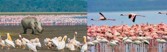 Lake Nakuru kenya wildlife safari