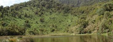 Lake Ngezi Hike as a Rwanda Safari activity in Volcanoes National Park