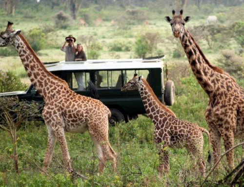 Three Tour Companies Banned From Accessing Maasai Mara National Reserve