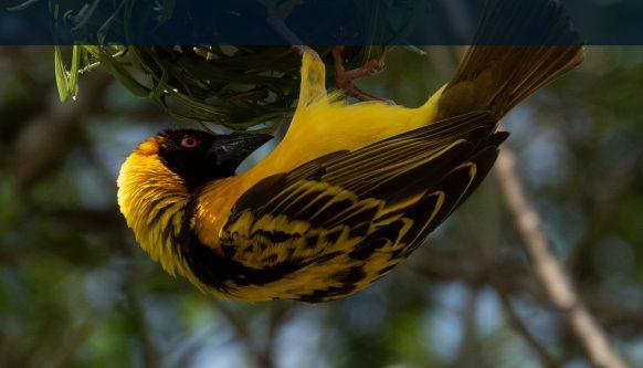 https://www.primeugandasafaris.com/facts-about-uganda-facts/uganda-birds