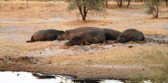 Makgadikgadi Pans National Park botswana safari