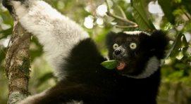 Mantadia National Park Madagascar Safari Tours