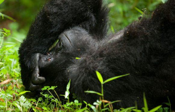 Adventure safaris in Uganda