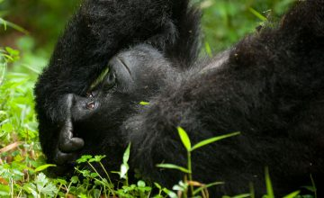 Mgahinga_Gorilla_National_Park1