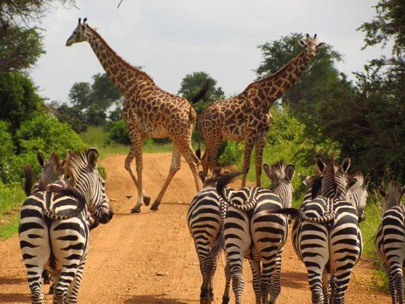 3 Days Lake Mburo Safari, 3 Days Wildlife safari in Uganda Tour To Lake Mburo National Park