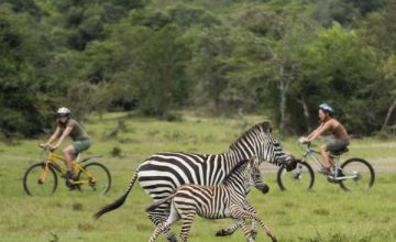 Mountain-Biking-Safari-Zebra-Lake-Mburo-Mihingo-Lodge