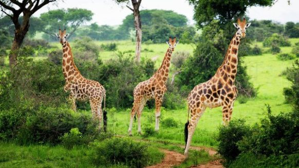 Murchison Falls Wildlife Safari in Ugand 3 Days