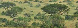 Murchison falls , Uganda safaris