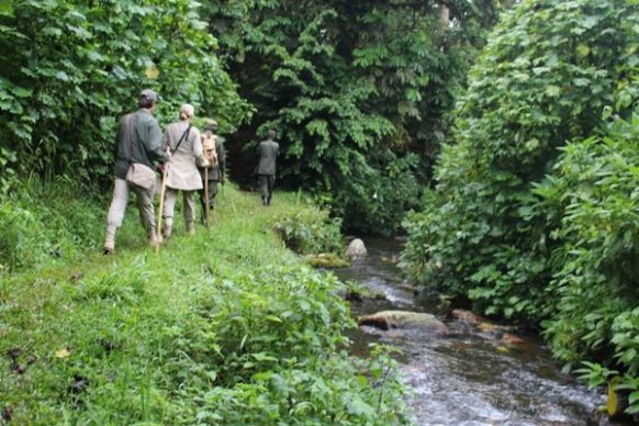 Nature Walks in Murchison Falls National Park Uganda tour