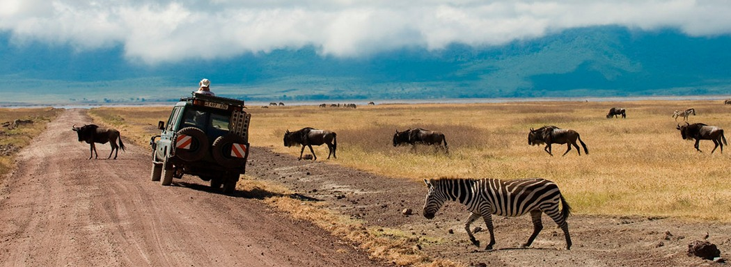 2 Days Tanzania Safari Ngorongoro Crater | 2 Day Ngorongoro Safari in Tanzania Wildlife Viewing Tour.